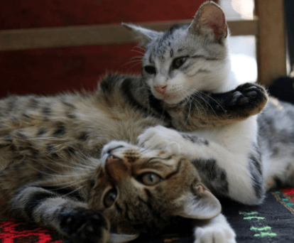 3 Ways to Keep Your Cat Entertained At Home